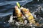 Летняя рыбалка! (Что, где, на что?)