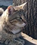 Дворовая кошка