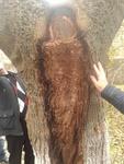 Образ Божьей матери на дереве